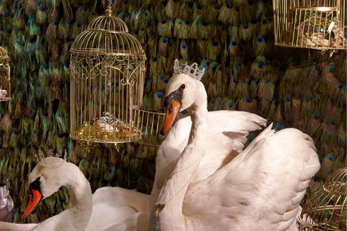 Close-up of the seven swans a-swimming, featured in one of the windows designed by Prop Studios as part of Liberty's Christmas scheme